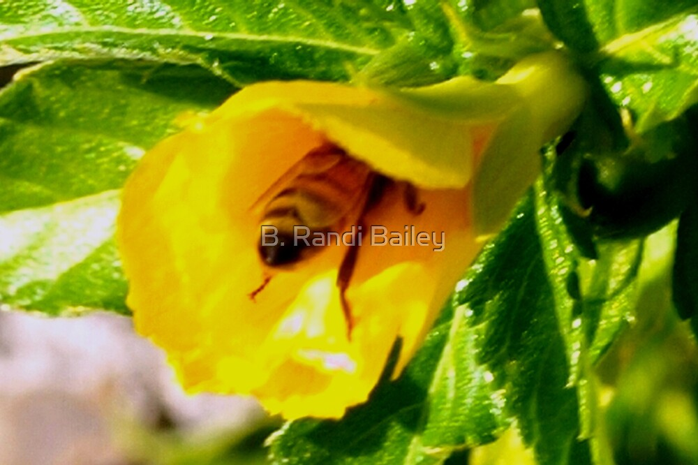 Nose for nectar by ♥⊱ B. Randi Bailey