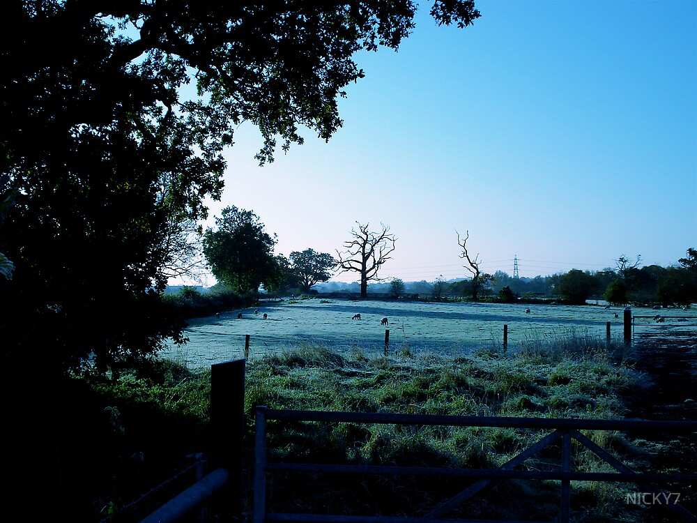 A BIT NIPPY THIS MORNING  by NICKY7