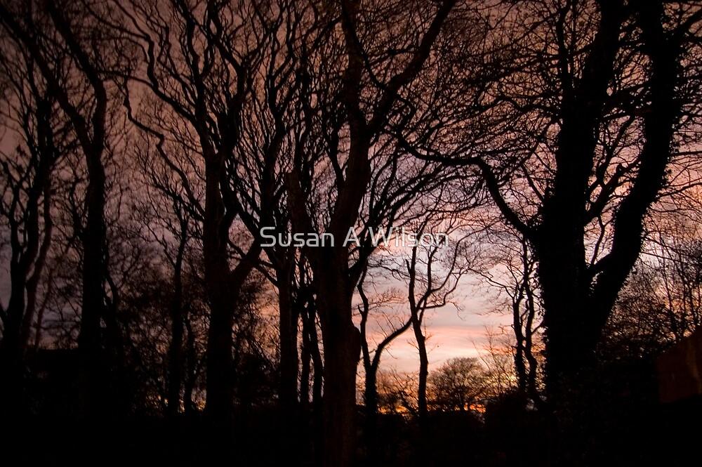 Evening Sky - III by Susan A Wilson