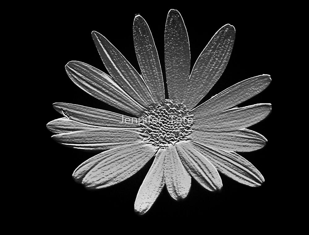 Silver Daisy by Jennifer  Tate