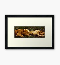 Lions Sleeping after the Kill, Serengeti, East Africa Framed Print