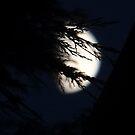 """ Moon Breeze "" by Richard Couchman"
