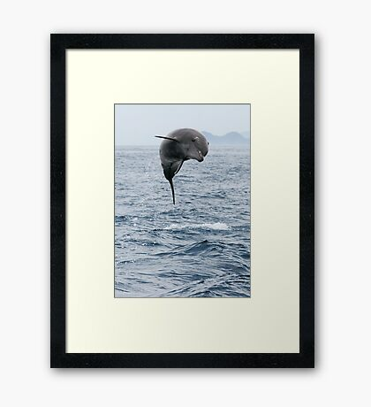 Jumping Dolphin II Framed Print