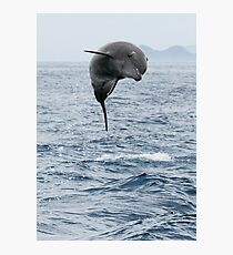 Jumping Dolphin II Photographic Print
