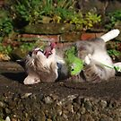 Tabby cat playing with toy mouse by turniptowers