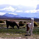 Bolivia by ioandavies