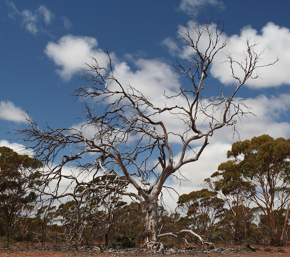 Outback Tree by Peter Macphail