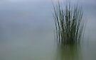 Water Bound by Christine Wilson