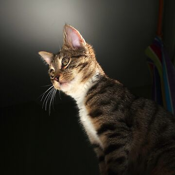 Tabby kitten with dark background by turniptowers