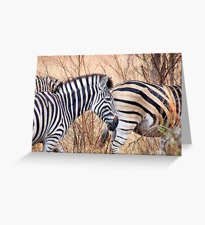 BURCHILLS ZEBRA Greeting Card