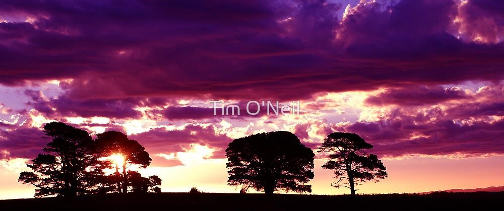 Sensational Sunset by Tim O'Neil