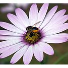 Flower with Bee by Peter Barrett