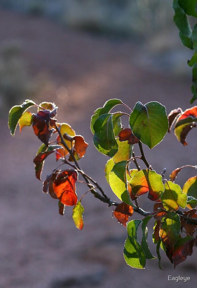 Last Color of the Season by Eagleye
