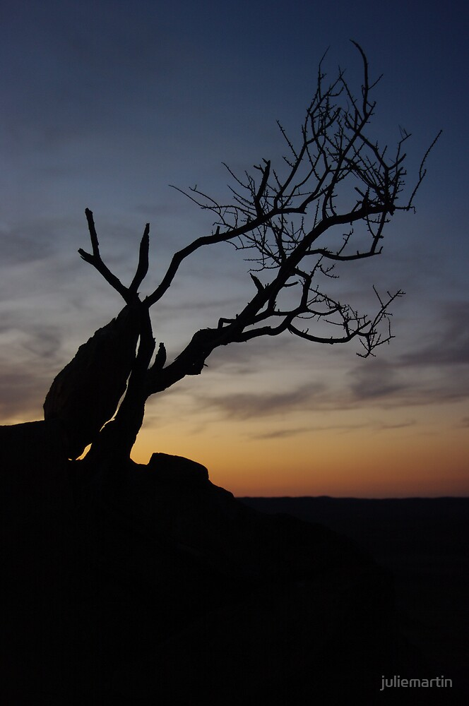 Bonsai silhouette by juliemartin