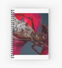 Spined Micrathena Spider Spiral Notebook