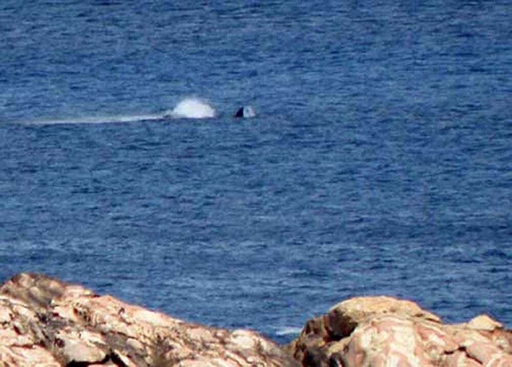 Humpback Whale by georgieboy98
