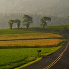 Take Me Home Country Roads by Andreas Mueller
