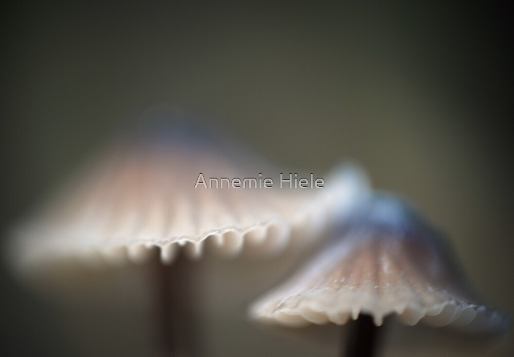 two caps  by Annemie Hiele