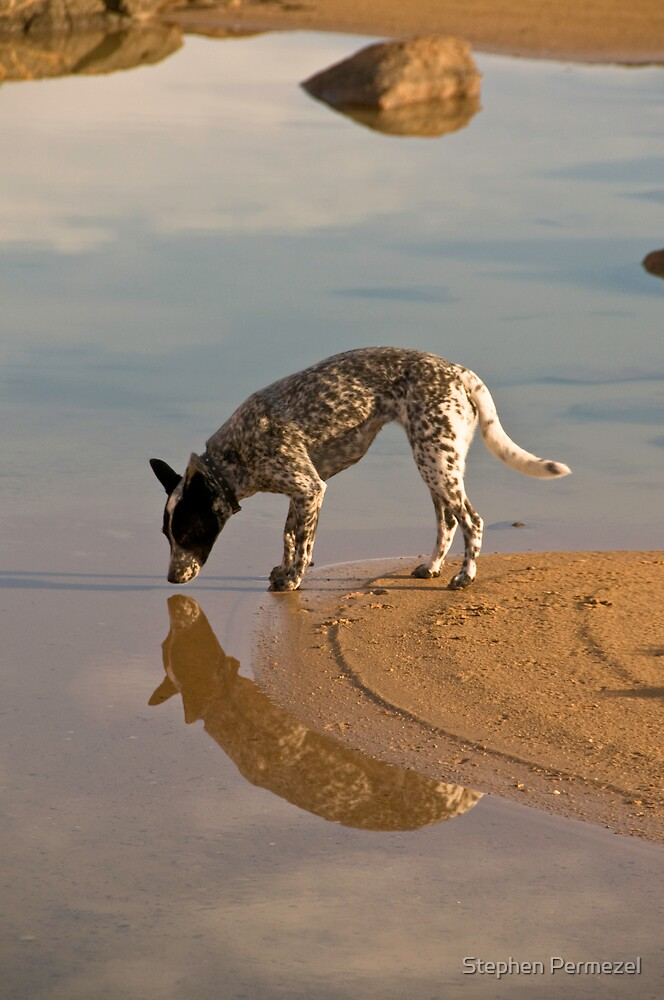 Cattle Dog and Reflection - South Australia by Stephen Permezel