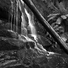 Lilydale Falls by Paula McManus