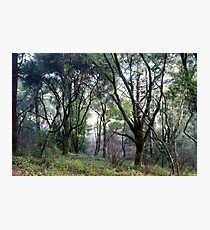 SC Forest Photographic Print