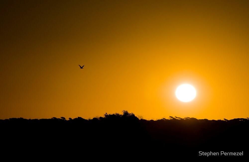 Sunset Bird - Eucla, Western Australia by Stephen Permezel