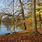 pond and some trees by dorka31