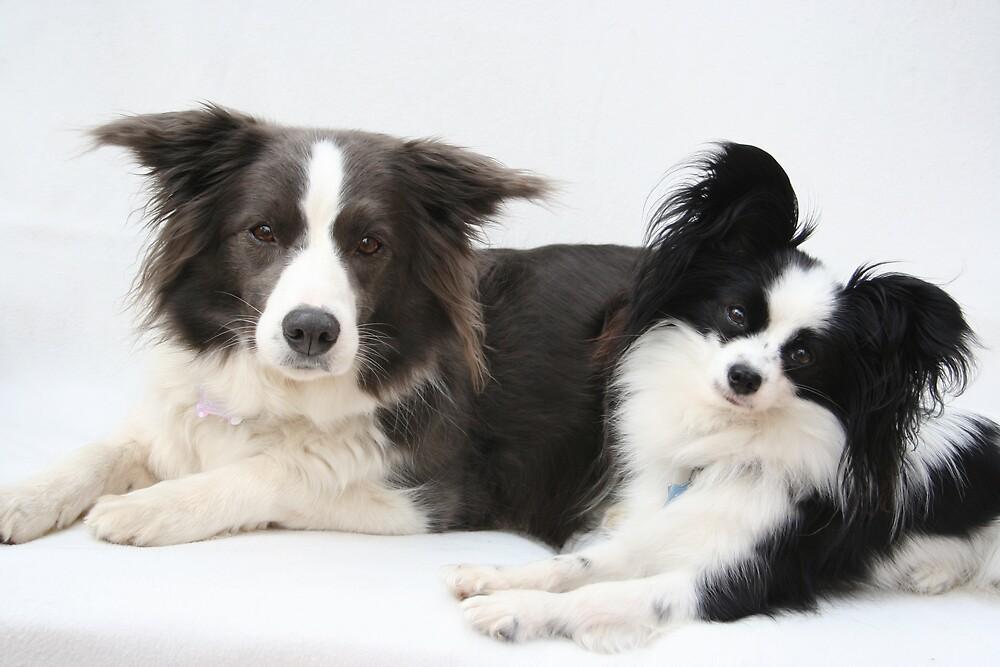 Sophie and Zara by fionajean