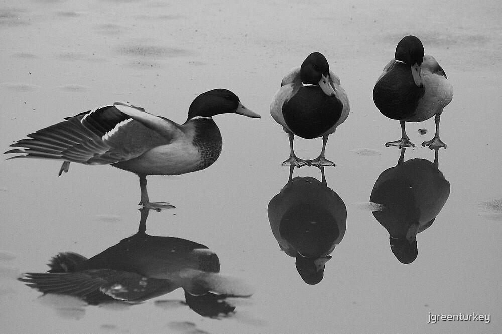 Ducks by jgreenturkey