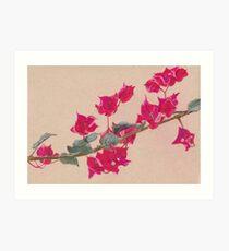 Bougainvillea Floral Design Art Print