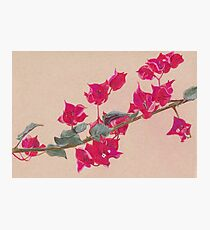 Bougainvillea Floral Design Photographic Print
