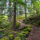 USA. Oregon. Rogue Gorge. Forest. by vadim19