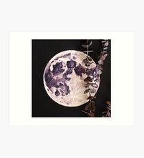 Eucalyptus Moon Art Print