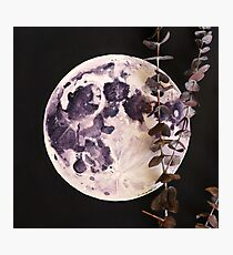 Eucalyptus Moon Photographic Print