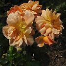 Orange Medley by MarianBendeth