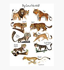 Big cats of the World Photographic Print