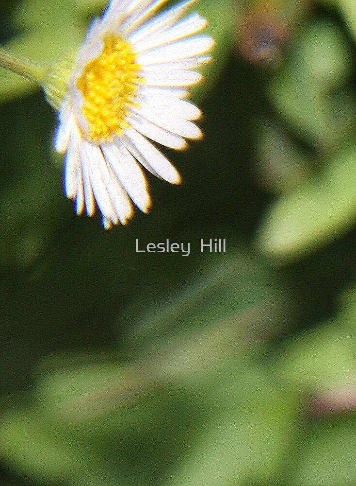 Seaside Daisy! by Lesley  Hill
