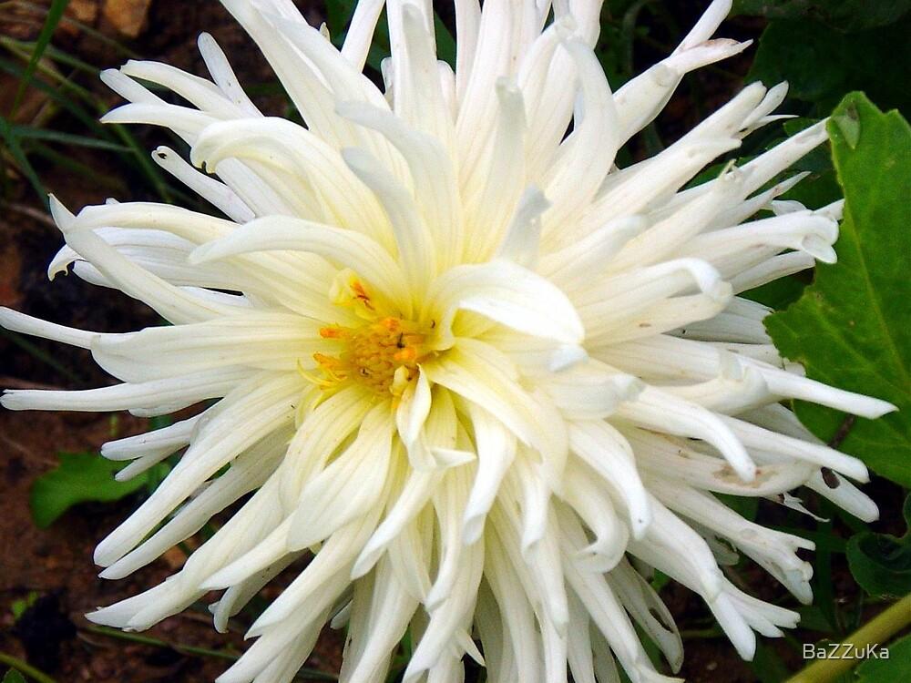 flower by BaZZuKa