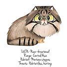 Pallas' Cat by rohanchak