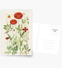 Botanical illustration: Poppy by David Dietrich – State Library Victoria Postcards