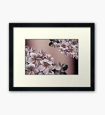 Oil Plumeria Blossoms Framed Print