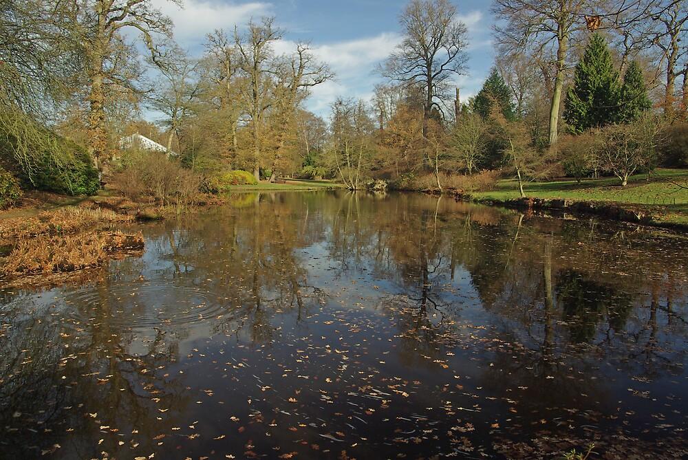 Autumn at Savill Garden, Windsor Park by ludek