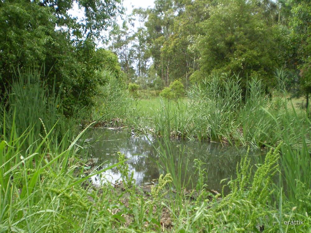 """Swamp""""d by erattik"""