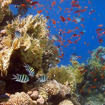Reef Scene by lilithlita