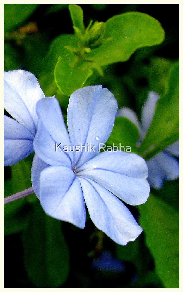 Flower by Kaushik Rabha
