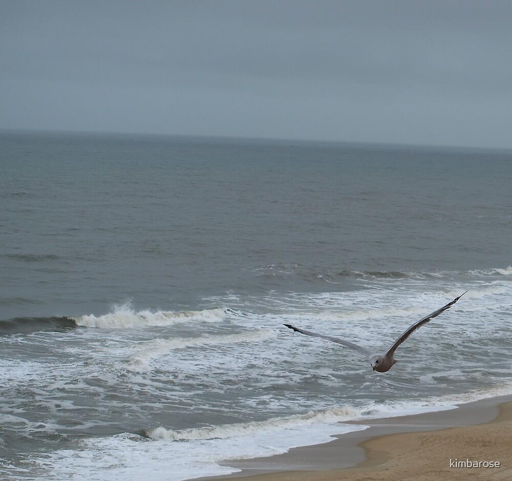Atlantic Seagull by kimbarose