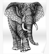 Adult coloring: elephant Poster