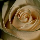 Vanilla Cream by Pamela Hubbard