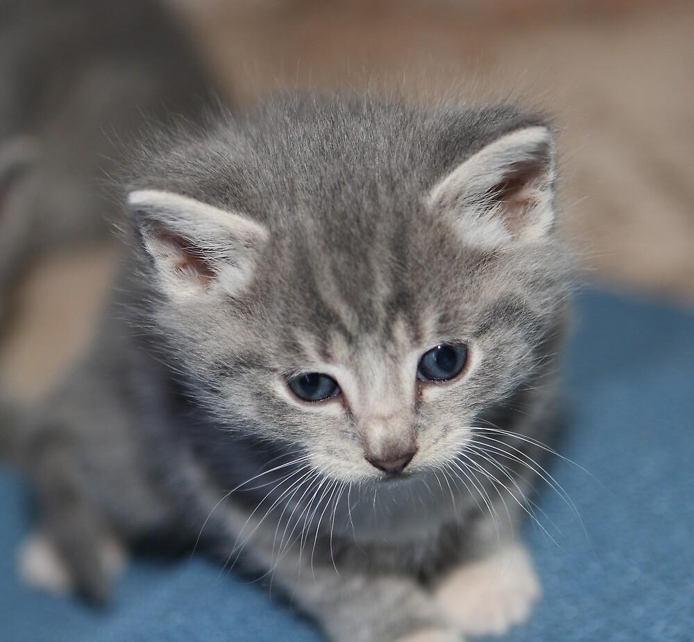 Cute Kitten by Peter Macphail