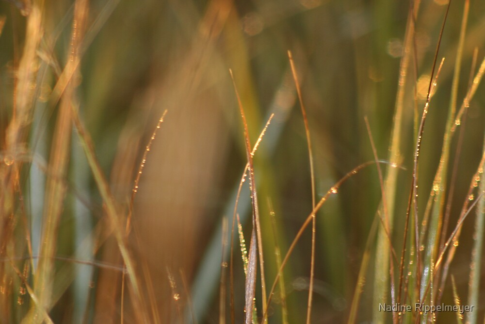 Dewy Grasses by Nadine Rippelmeyer